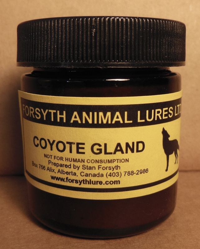 how to make coyote gland lure