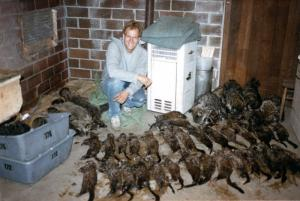 Gerald Schmitt - Nice run of mink from a few years back.