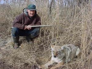Bob Wendt - Coyote Trapping