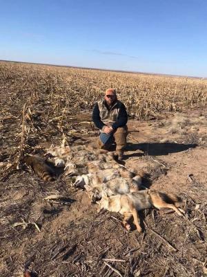 Apple Road Coyote Catch