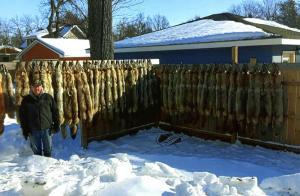 John Almquist - 2019 Coyote Trapline = 41 Coyote, 1 Red Fox, 1 Badger