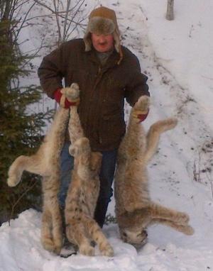 Lynx - Stan Forsyth