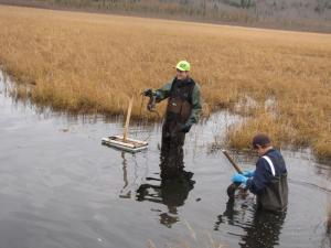 Muskrat Trapping - North Alberta, Canada - Miller Boys