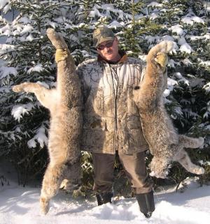 Lynx - Stan Forsyth - Forsyth Animal Lures