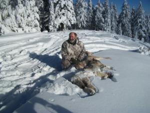 Another Wolf Catch in Idaho by L. Matthews.